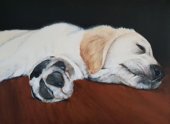 Hond-Bibi